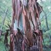 Tree x Change VII -Mid Summer 2017 76x76cm Oil on Linen