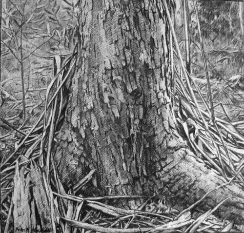 Drawing for the painting 'Tree' - willow charcoal on paper 40x49 cm 2011