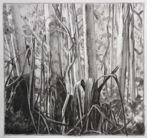 Blackheath Forest Trees I - pencil and wash on paper 17.4x18.4cm 2012