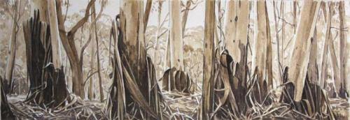 Shedding Eucalypts - Blackheath - pencil and sepia wash on paper 15x42.5cm 2013