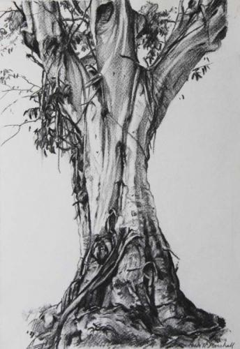 Study of a Tree II 'Atlas' - willow charcoal on paper 39.5x25.5cm -2014