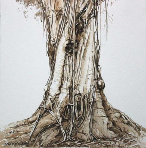 Study of a Tree Trunk - Atlas  - Pencil and Watercolour  40x40cm-2014