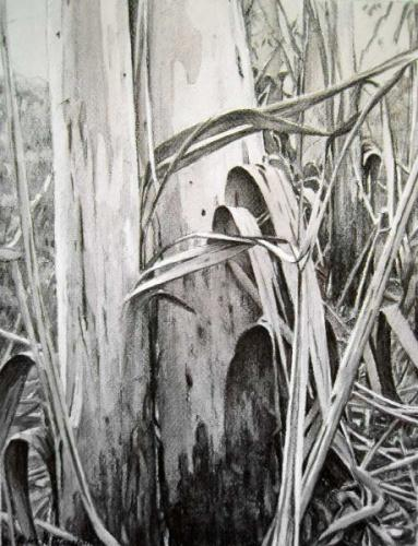 Disrobing Trees - willow charcoal and sepia wash on Fabriano paper 36.5x27cm 2013