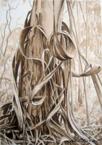 Study for Heart of Bark - pencil and sepia wash on paper 21x15cm 2013