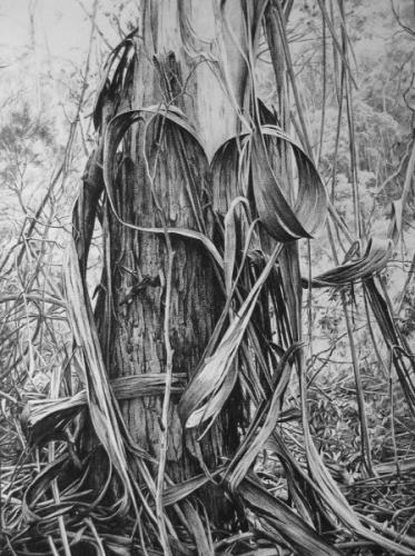 Heart of Bark - willow charcoal on Fabriano paper 93.5x70 cm 2012
