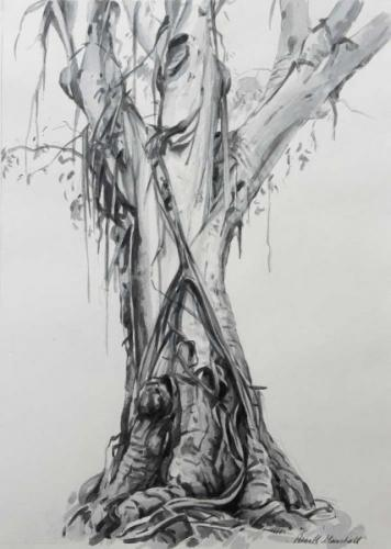 Study of a Tree - Atlas  - pencil and watercolour 38x27-5cm 2014
