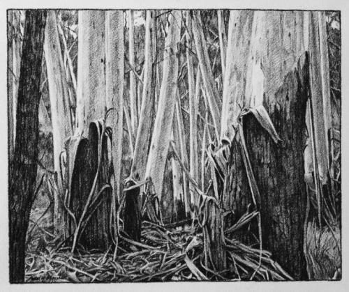 Woodland - willow charcoal on Fabriano paper 46.5x57cm 2013